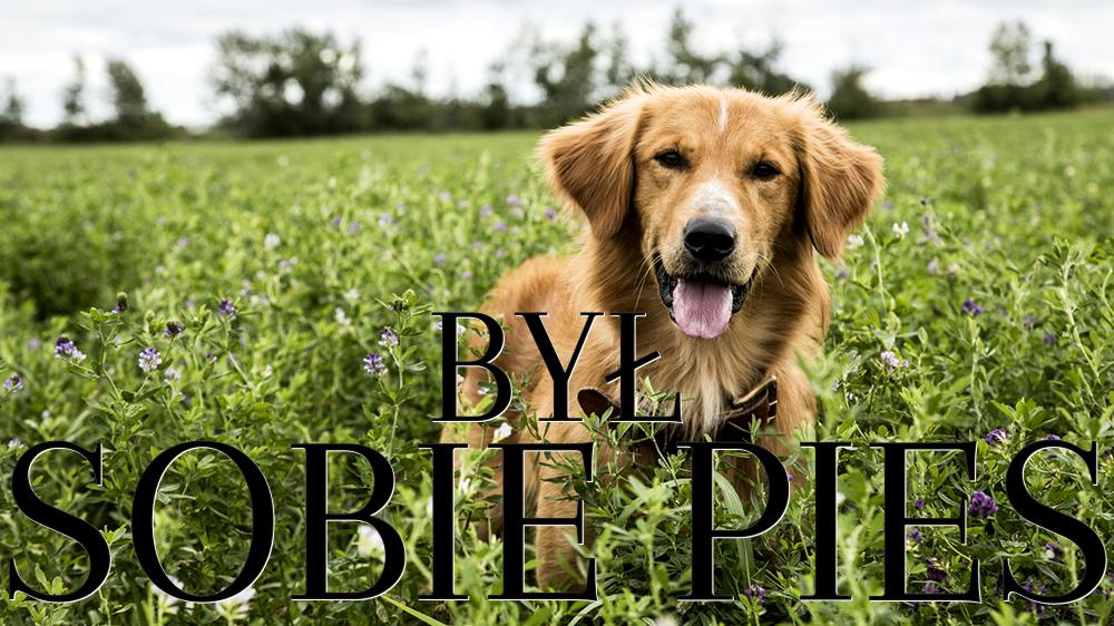 A Dog S Purpose Polish Movie